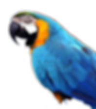 blue parrot_edited.png