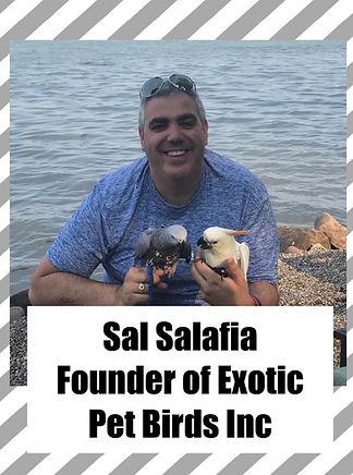 sal salafia