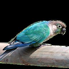 TRANSPARENT BIRD.png