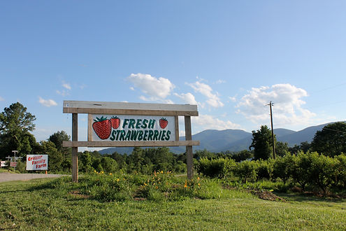 Fresh Strawberries at Critzer Family Farm