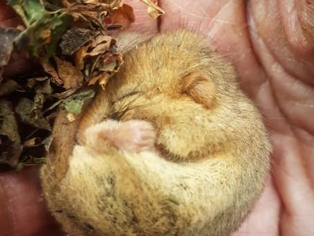 Home-Learning, Hope and Hibernation