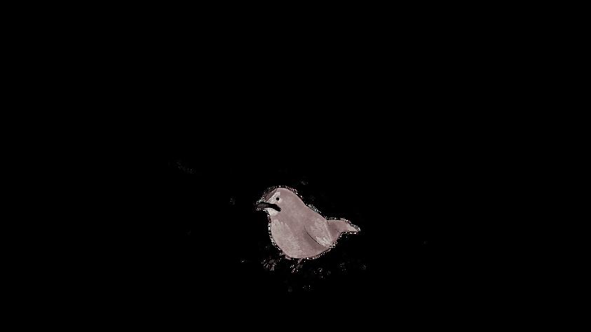 bird0095.png