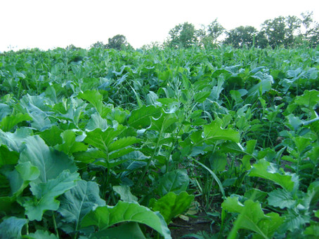 What Are You Growing? A Early Season or Late Season Kill Plot