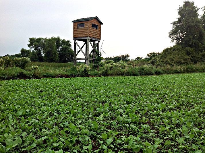 custom built deer box stand in Wisconsin overlookin a turnip food plot
