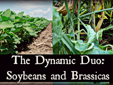 The Dynamic Duo: Soybeans and Brassicas
