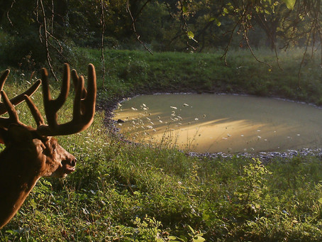 Quality Water for Quality Whitetail Hunting