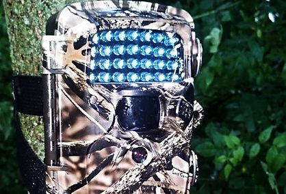 covert trail camera