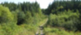 fourwheeler trail