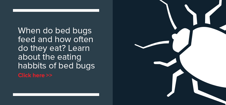 preparing-bedbug-extermination