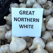 Great Northern White, Seed Stock