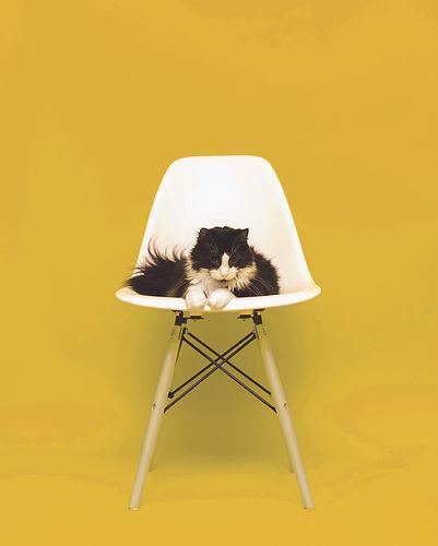 CAT_yellow.jpg