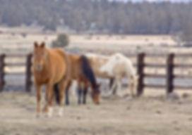 horses_zkgNPPF_.jpg