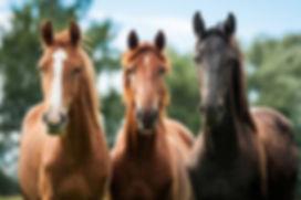 three-horses.jpg.860x0_q70_crop-scale.jp