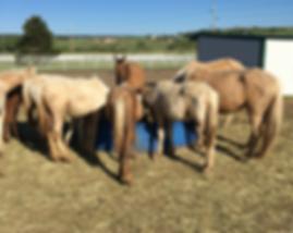 49-horses.png