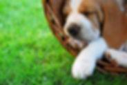 Novasol Hund