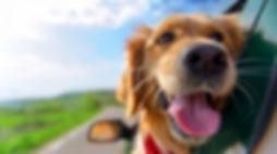 Hund im Auto.jpg