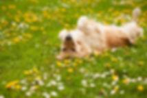 Urlaub Hund .jpg