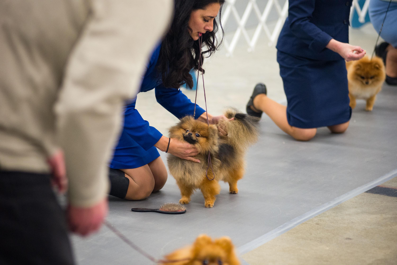 AKC Dog Show Grays Harbor Fairgrounds-6.