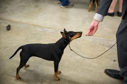 AKC Dog Show Grays Harbor Fairgrounds-22