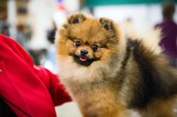 AKC Dog Show Grays Harbor Fairgrounds-19