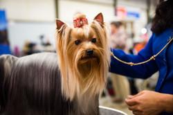 AKC Dog Show Grays Harbor Fairgrounds-14