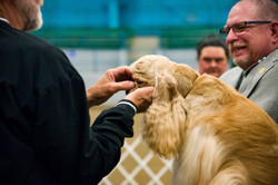 AKC Dog Show Grays Harbor Fairgrounds-27