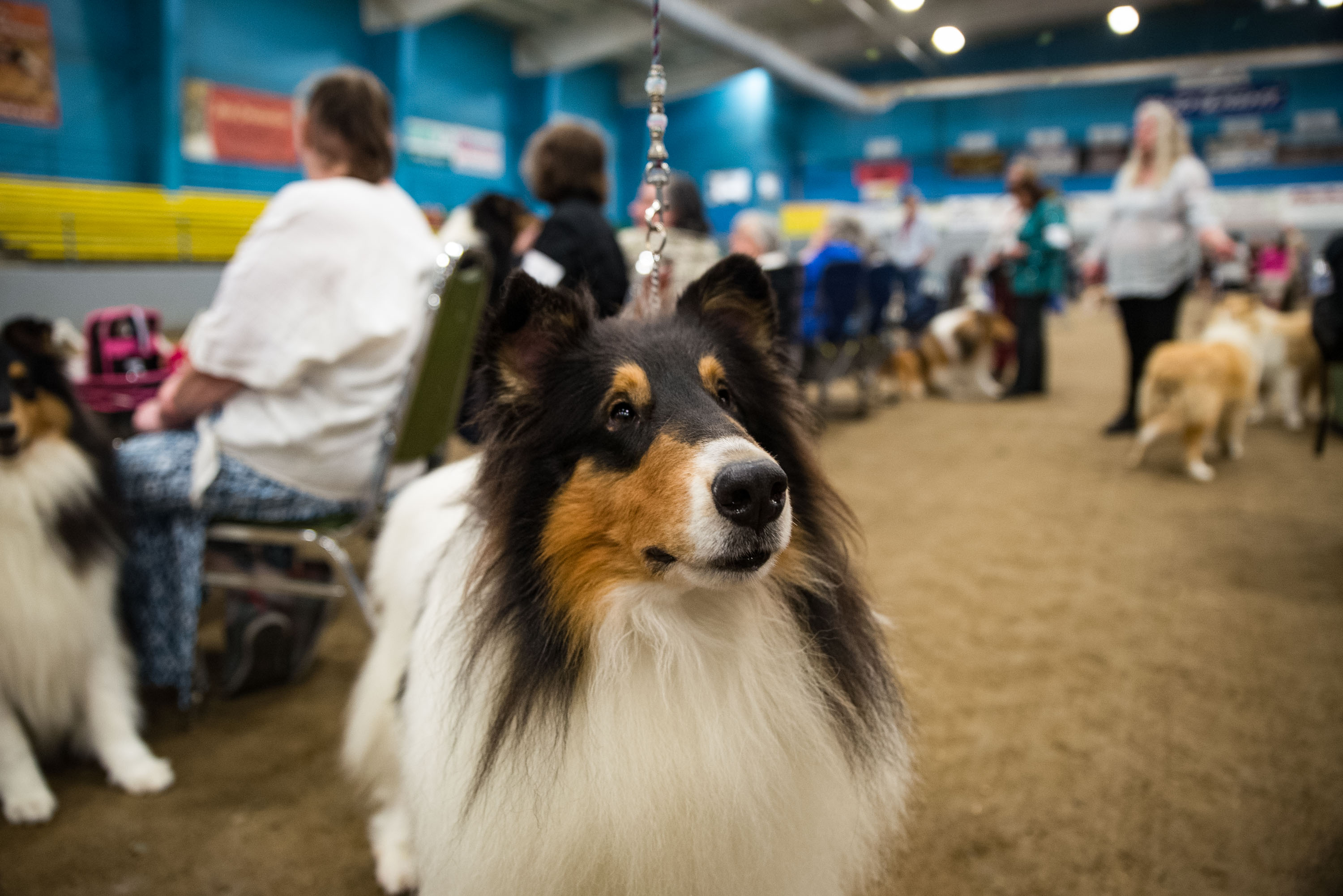 AKC Dog Show Grays Harbor Fairgrounds-17