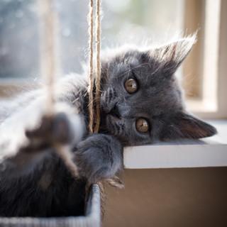 Headshot of Cat