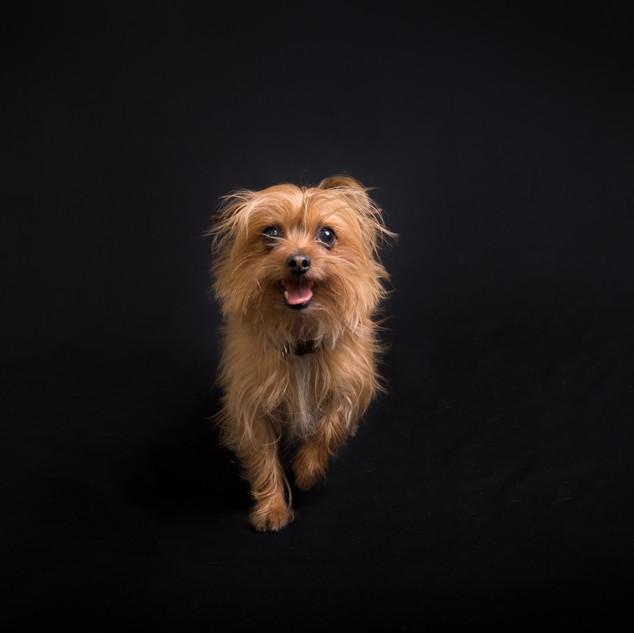 Headshot of Dog