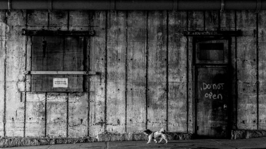 Dog walking past a do not open sign - NYC - black and white photography - Street photography
