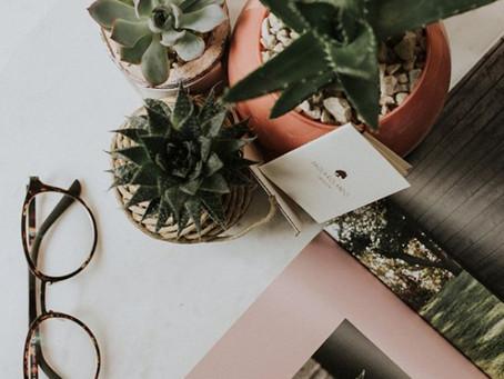 Piante in casa: i benefici di averle vicino a te
