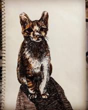 The house cat, Epi.