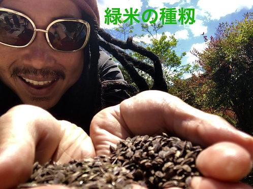 緑米の種2020/100g単位!/自然農の種