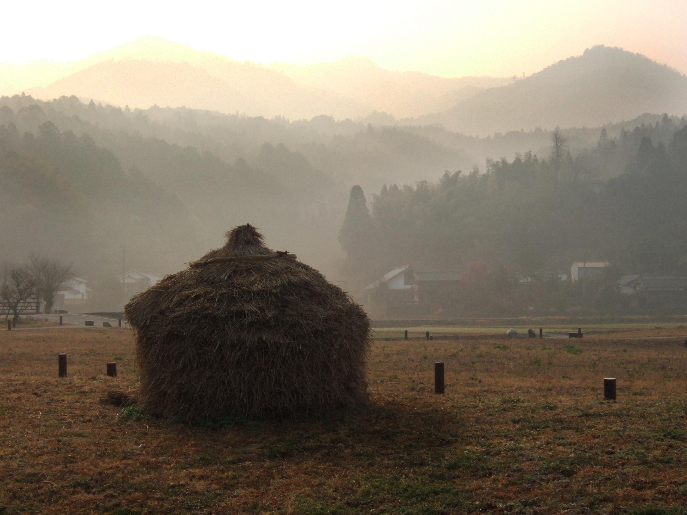 深田の朝霧