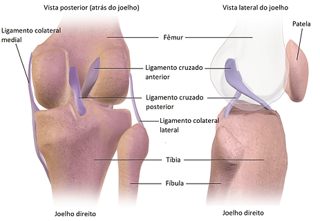LigamentoColateral-min.png