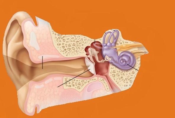 oor hoortoestellen gehoorbescherming veurne koksijde alveringem bulskamp nieuwpoort oostduinkerke de panne adinkerke diksmuide