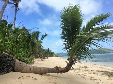 1042_mirin.world_Fiji.JPG