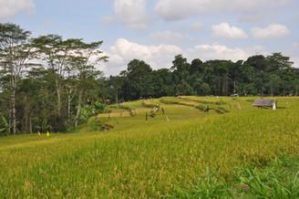 1484_mirin.world_Bali.JPG
