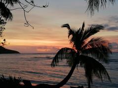 1084_mirin.world_Fiji.jpg