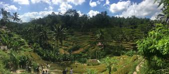 1600_mirin.world_Bali.JPG