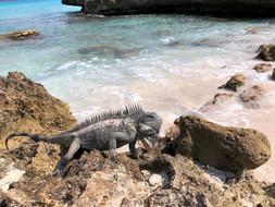 178_mirin.world_Bonaire.JPG