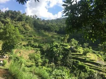 1620_mirin.world_Bali.JPG