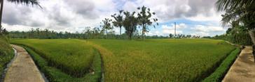 1468_mirin.world_Bali.JPG