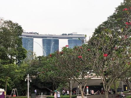 1062_mirin.world_Singapore.JPG