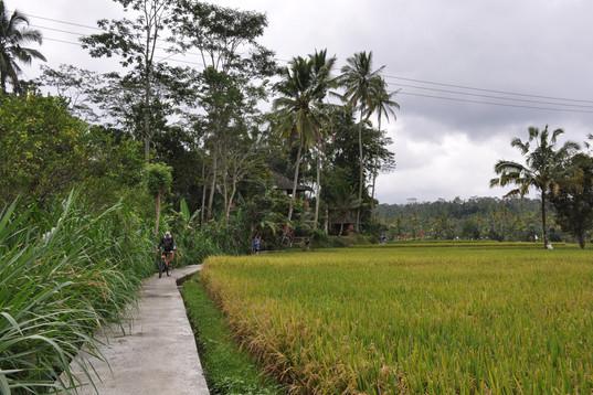 1472_mirin.world_Bali.JPG
