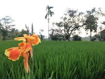 1404_mirin.world_Bali.JPG