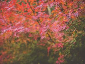 [te-ra]October