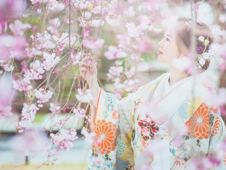 桜の前撮り*ご予約お受付けスタートです