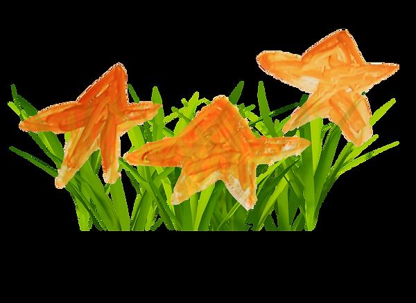 étoile 2.png