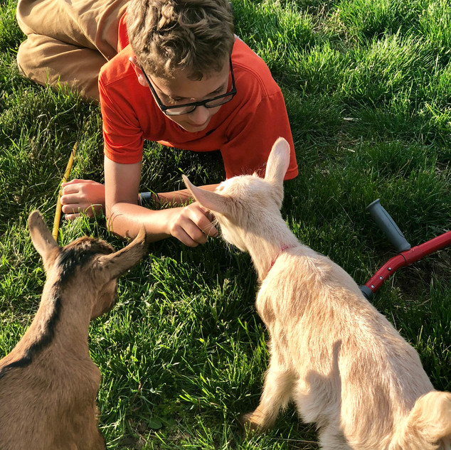 goat kids with Owen in the grass.jpg